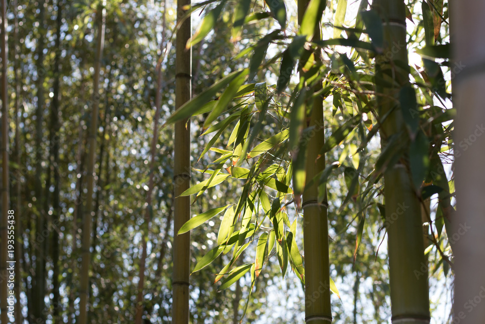 Bamboo plant cluster silhouetted against sun. High contrast.