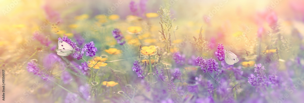 Selective focus on butterfly on lavender in meadow