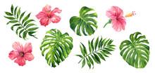 Realistic Tropical Botanical F...