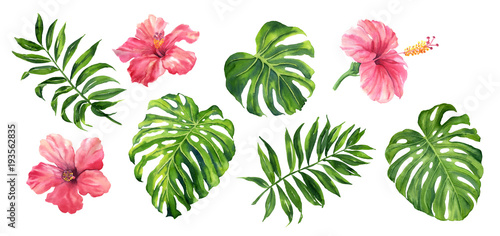 Realistic tropical botanical foliage plants Fotobehang