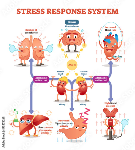 Fotografía  Stress response system vector illustration diagram, nerve impulses scheme