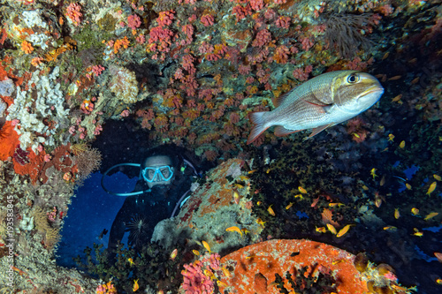 Poster Naufrage scuba diver diving Ship Wreck propeller in maldives indian ocean