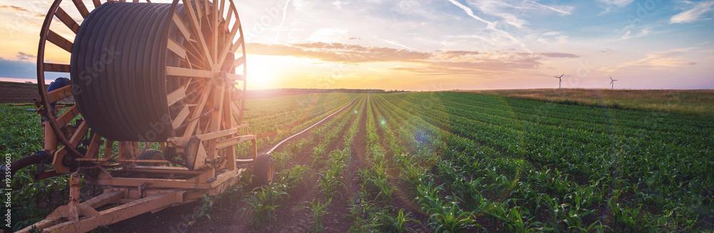 Fototapety, obrazy: Bewässerungssystem in der Landwirtschaft