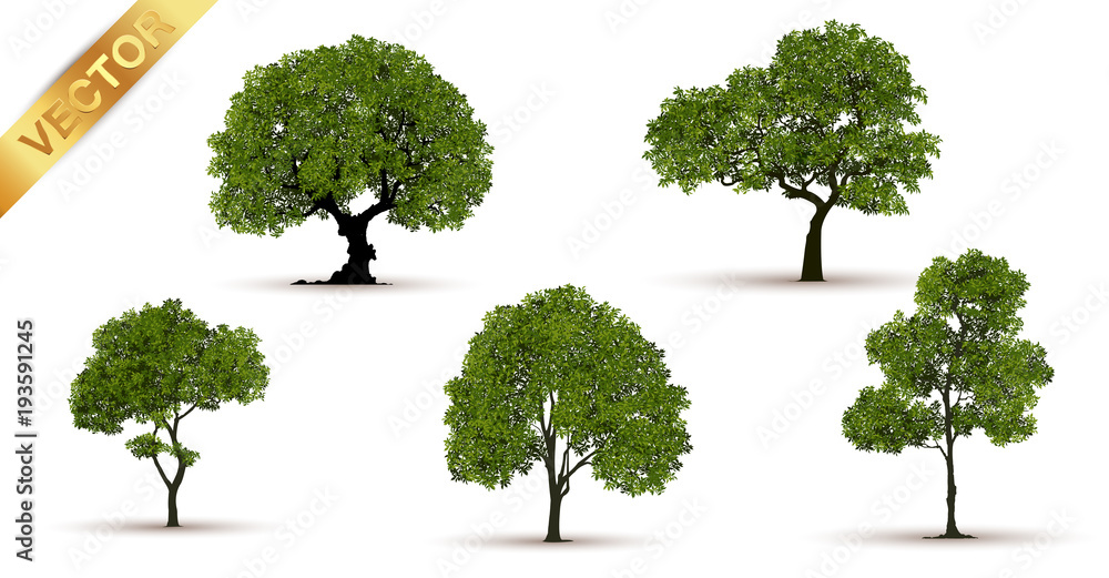 Fototapety, obrazy: Beautiful tree on a white background