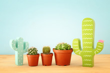 Image Of Cactus In A Pot Infro...