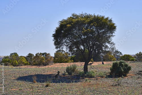 Fototapety, obrazy: Australia, Mungo National Park