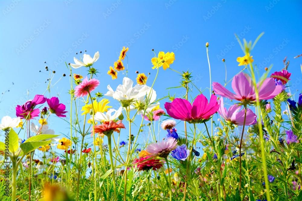 Leinwandbild Motiv - S.H.exclusiv : Grußkarte - bunte Blumenwiese - Sommerblumen