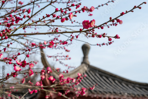 plum trees and buildings