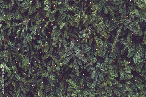 Texture of wall decorated with garlands and green pine fir branches, Christmas decorations background