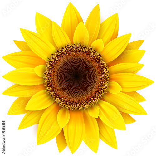 Fotografia Sunflower flower isolated