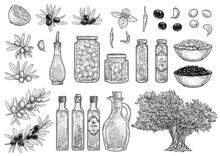 Olive Collection Illustration,...