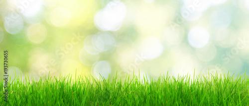 fototapeta na drzwi i meble Gras im Frühling