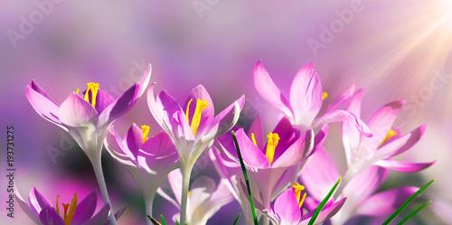 Zdjęcie XXL Łąka z delikatnymi kwiatami na wiosnę
