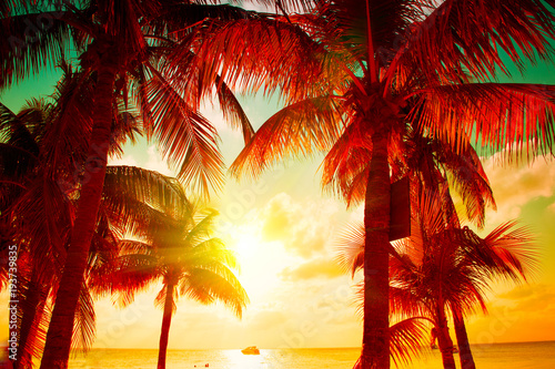 Papiers peints Tropical plage Sunset beach with tropical palm tree over beautiful sky. Palms and beautiful sky background. Tourism, vacation concept backdrop. Palms silhouettes over orange sun