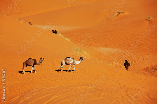 Poster Oranje eclat Caravan in desert