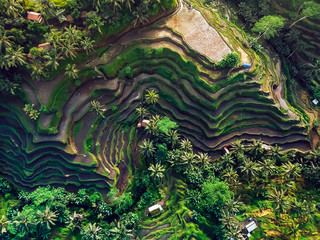 rice fields on the mountain ,the view from the top