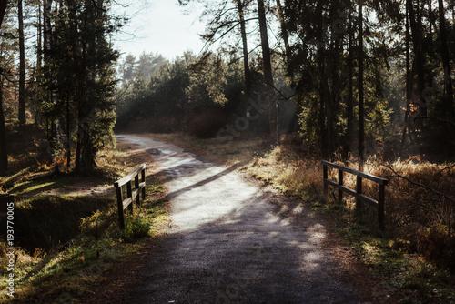 Tuinposter Weg in bos Urokliwa ścieżka i mostek z pięknym światłem