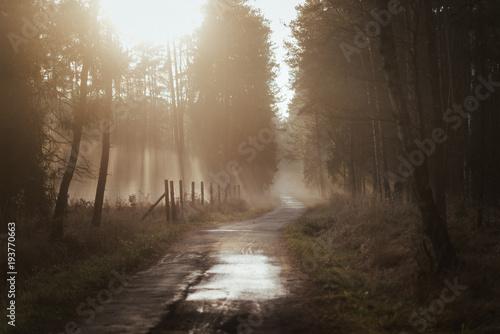 Deurstickers Weg in bos Mglista droga o zachodzie słońca