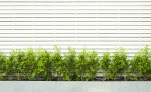 Wall Made Form White Wood Fence With Green Plants.