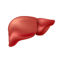 Liver Isolated On White Backgr...