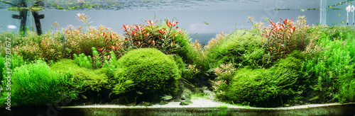 Fotografie, Tablou Aquarium algae, elements of flora in fishbowl