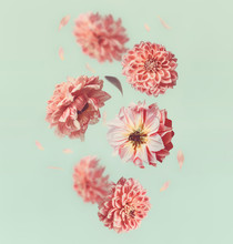 Beautiful  Flying  Flowers And Pastel Pink Petals At Light Mint Background, Creative Floral Layout, Vertical