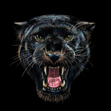 Roaring black panther on black background - 193827251