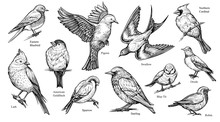 Birds Hand Drawn Vector Illust...