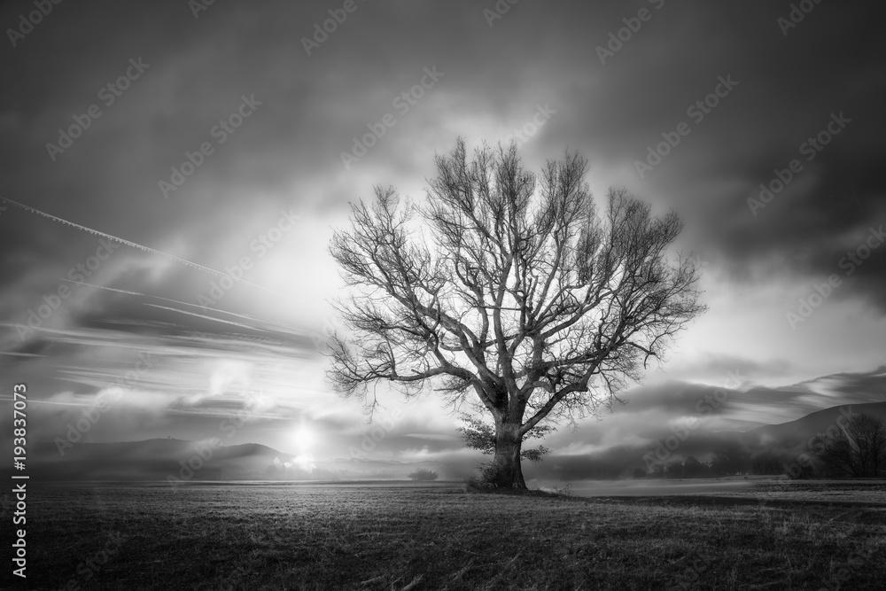 Fototapeta Arbre au levé du soleil