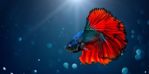 Borba protiv ribe Crveno plavo Svjetlo pozadina s bokehom
