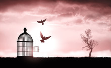 Bird Cage On The Grass At Sunset