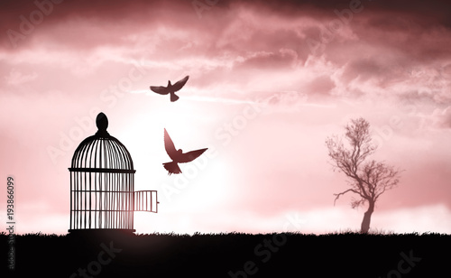 Photo  bird cage on the grass at sunset