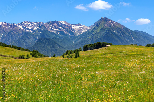Foto auf Leinwand Gebirge Alpine meadow and mountains on background in Italy.