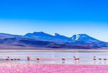View On Group Of Flamingos By ...