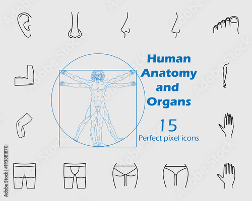 Human anatomy icon set. Premium quality graphic design. Signs ...