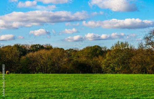 Foto op Aluminium Blauw English green meadow on a sunny day, a typical rural landscape of the British countryside