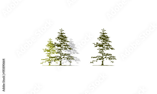 Foto  Cedar Tree Template Set