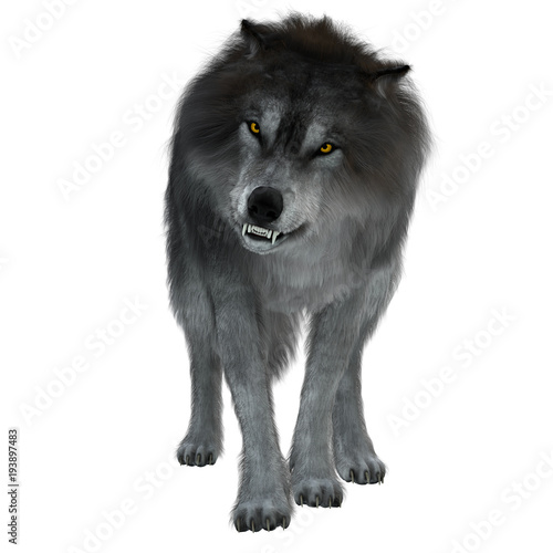 Fotografie, Obraz  Dire Wolf on White - The Dire Wolf was a prehistoric carnivore that lived in North and South America during the Pleistocene Period
