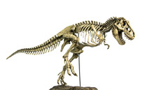 Skeleton Famous Dinosaurs Of C...