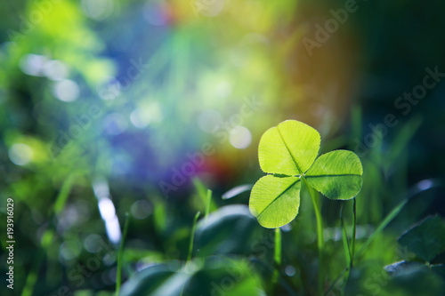 Sunlit spring clover leaf in meadow Poster Mural XXL