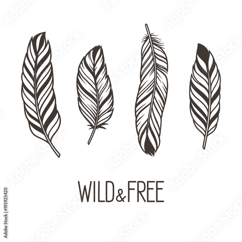 Set of hand drawn stylized bird feathers