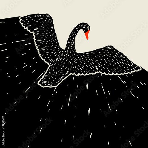 Naklejka premium Tło z latającego czarnego łabędzia. Ręcznie rysowane ptak