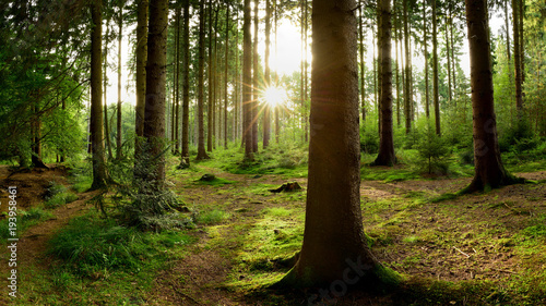 Fototapeten Wald Beautiful forest with bright sun shining through the trees