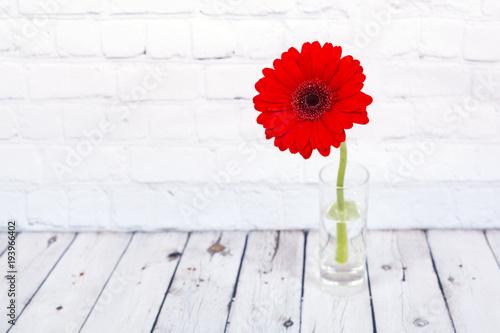 Spoed Foto op Canvas Gerbera Red gerbera daisy