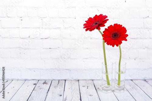 Poster Gerbera Red gerbera daisy