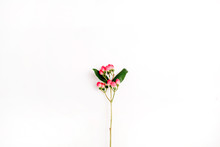 Hypericum Flower Branch On Whi...