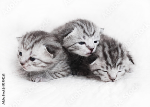 Cute Kittens On A White Background Beautiful Plush Kittens Babies Buy This Stock Photo And Explore Similar Images At Adobe Stock Adobe Stock