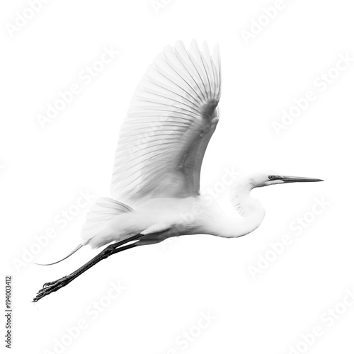 Great Egret V Canvas Print