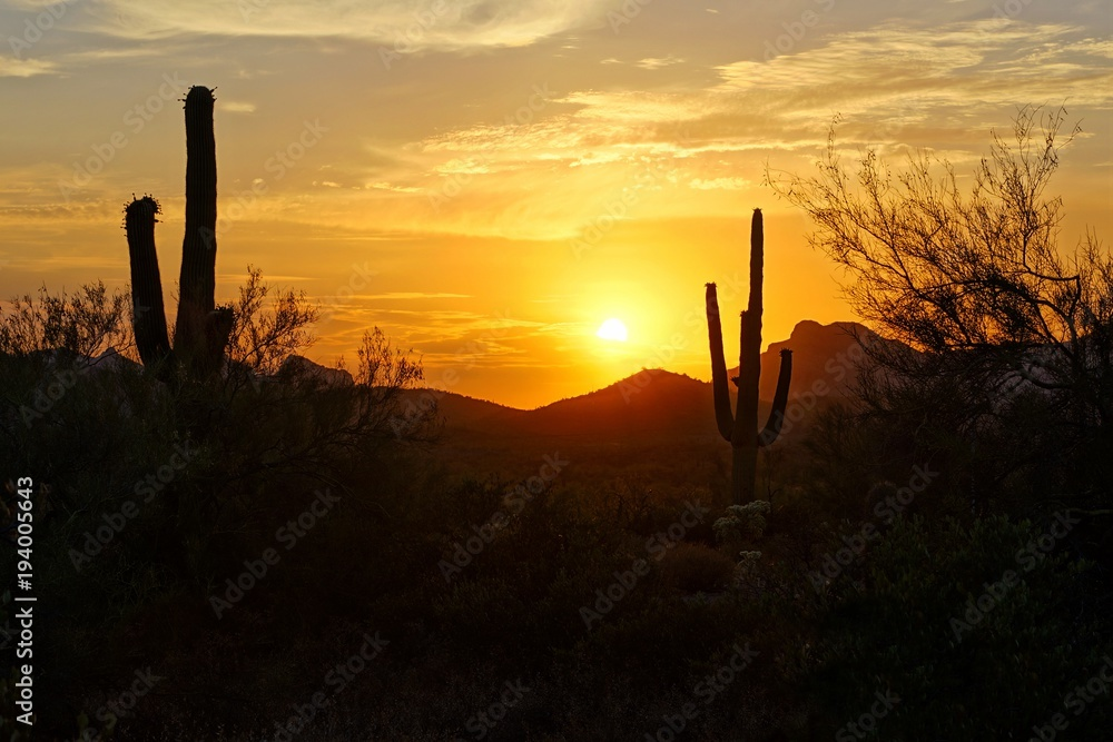 Sunset silhouette view of the Arizona desert with Saguaro cacti and mountains