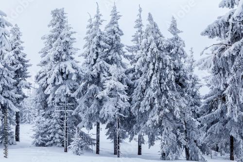 piekny-zimowy-las-beskidu-slaskiego